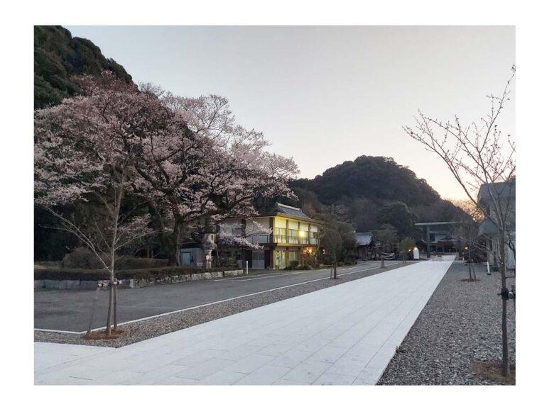 《ロケーション撮影》春の訪れ桜の開花が発表されました。いよいよ春のウェディングシーズンです♪